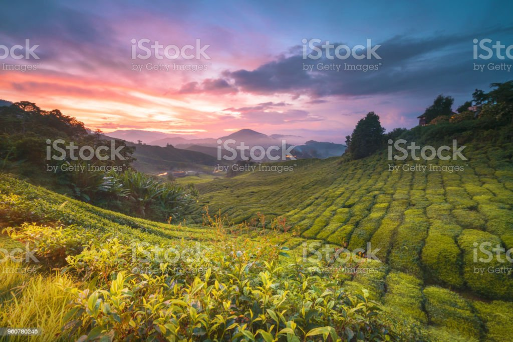 Cameron Highland stock photo