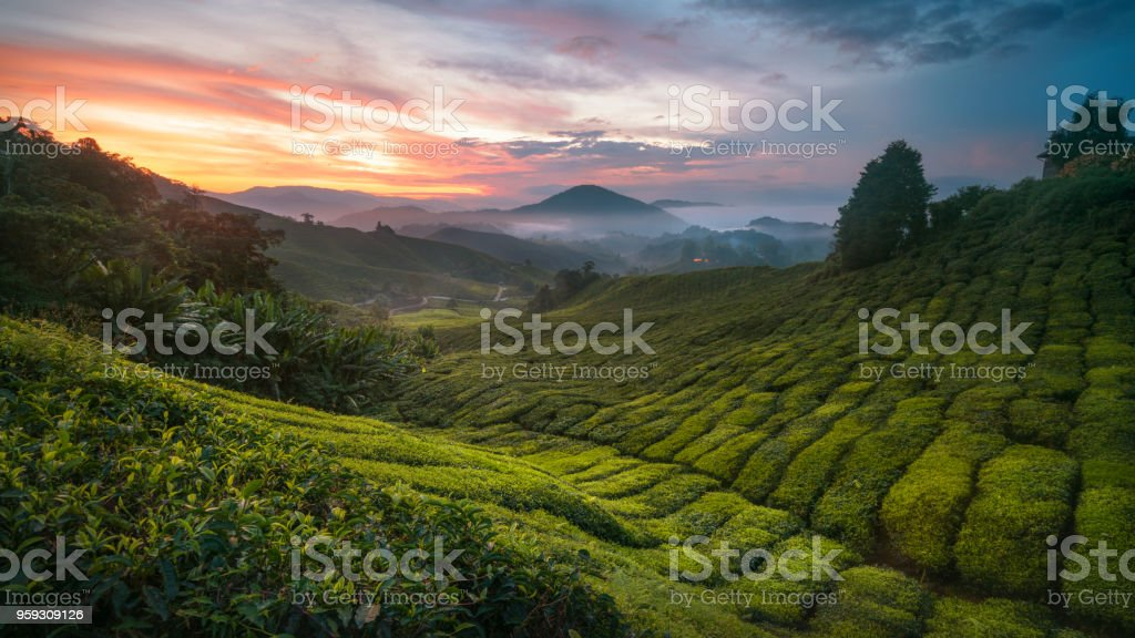 Cameron Highland sunrise stock photo