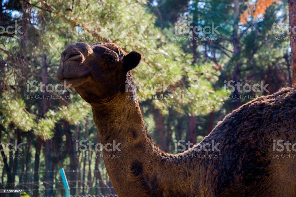 camille in the zoo in Denizli stock photo