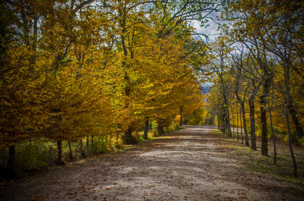 Camino dorado stock photo