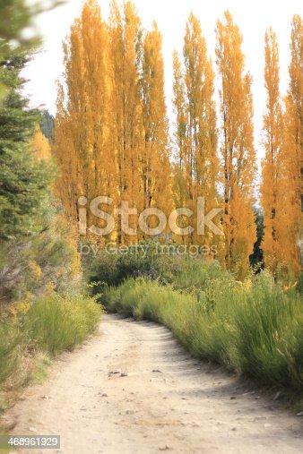 camino y alerces en otoño