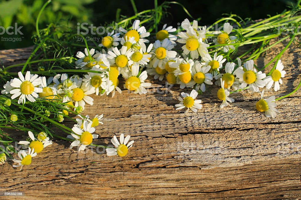 Camomile flowers on  wooden background royalty-free stock photo