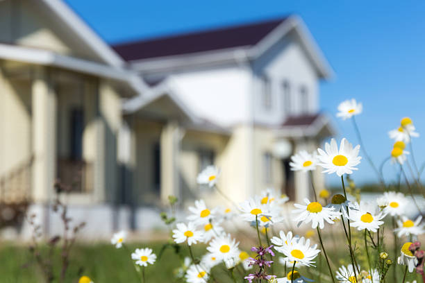camomiles - house with flowers stock photos and pictures