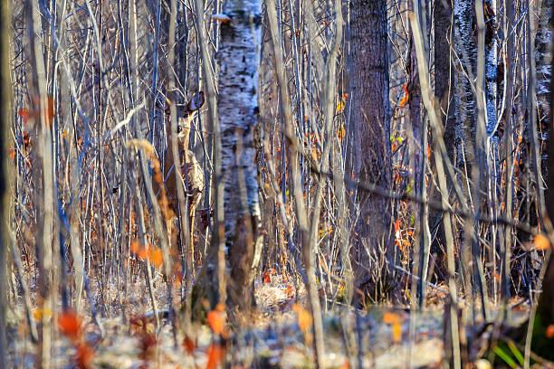Camouflage Deer - foto de stock