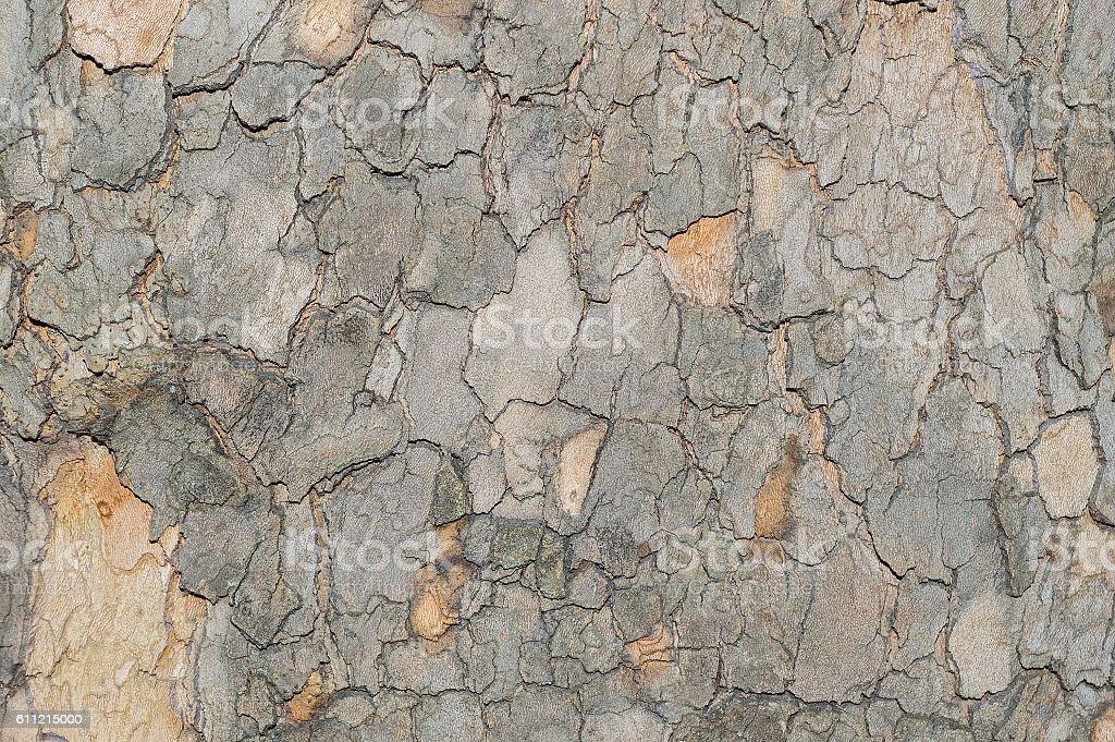 Camouflage pattern like Sycamore Platunus tree bark stock photo
