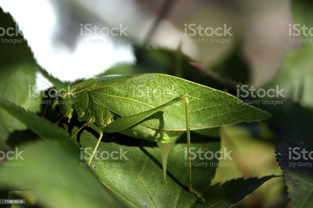 Camouflage royalty-free stock photo