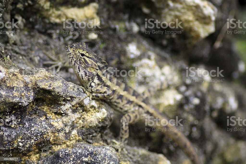 camouflage royalty-free stock photo