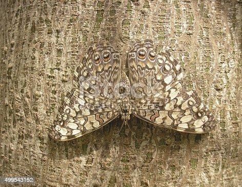istock camouflage 499543152