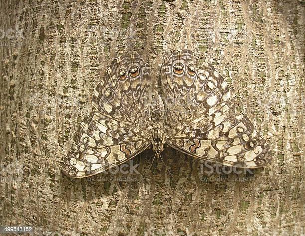 Camouflage picture id499543152?b=1&k=6&m=499543152&s=612x612&h=4bw2pixoze 9kcbptu5pknvno1wv7eipx0zieawsrs8=