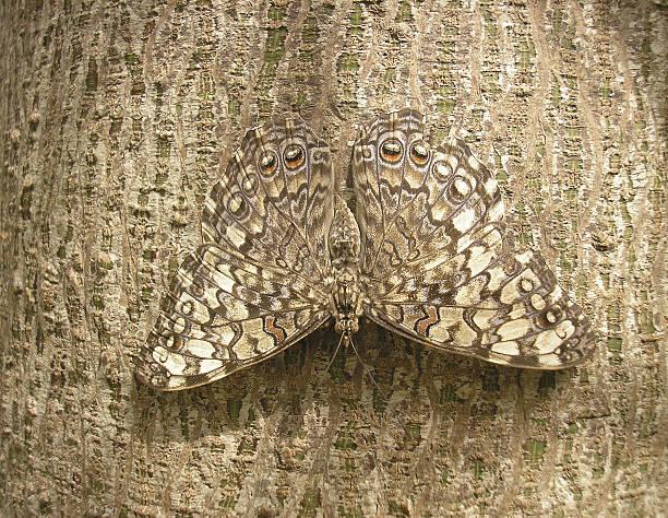 - camouflage - flecktarn stock-fotos und bilder