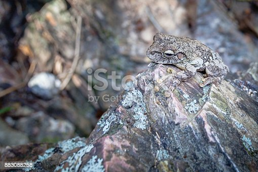 istock Camouflaged frog on rock 883088258