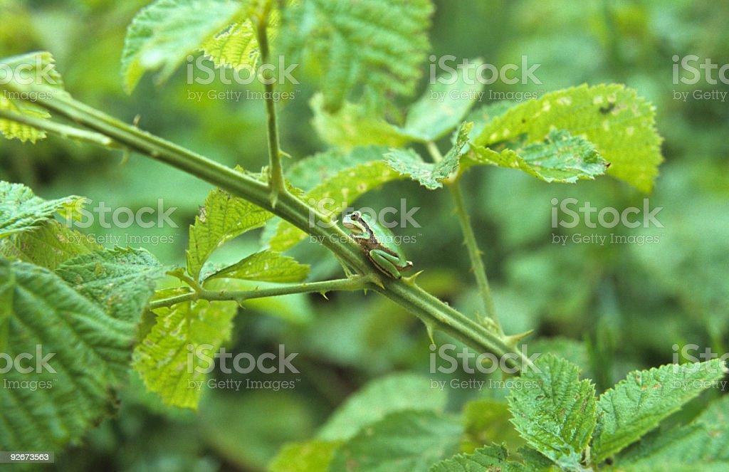 Camouflaged Frog stock photo