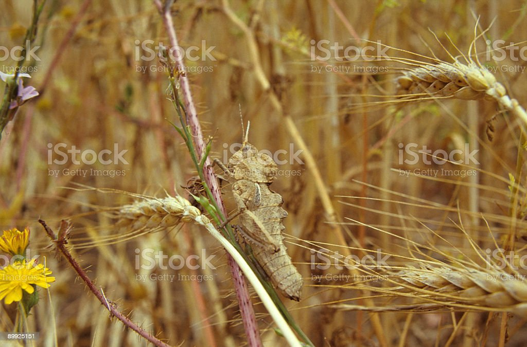 Camouflaged Insect royalty-free stock photo