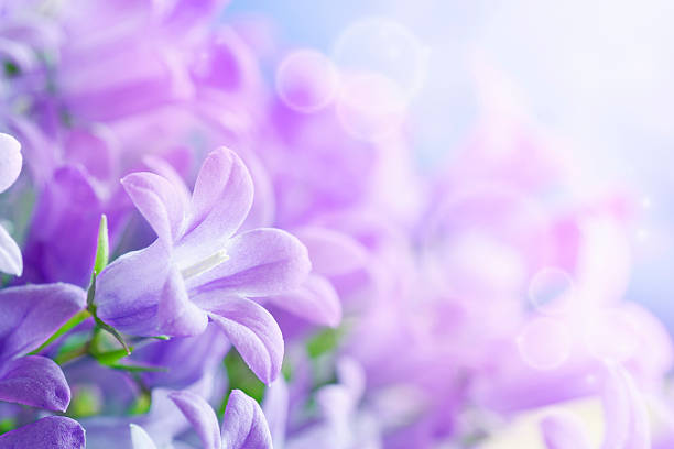 campanula background - soft focus stock photos and pictures