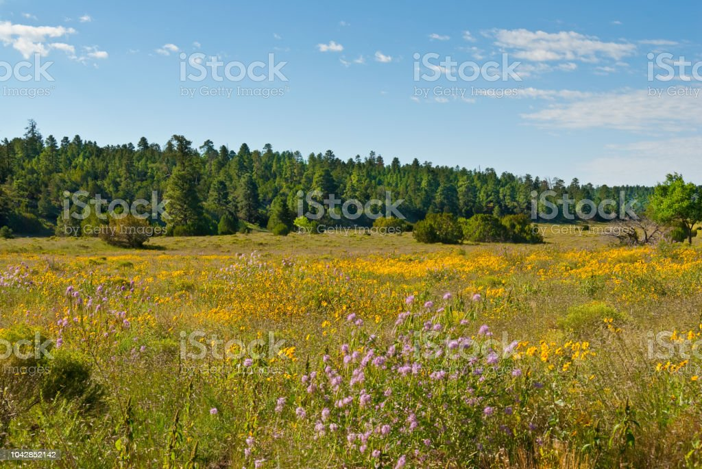 Campbell Meadow stock photo