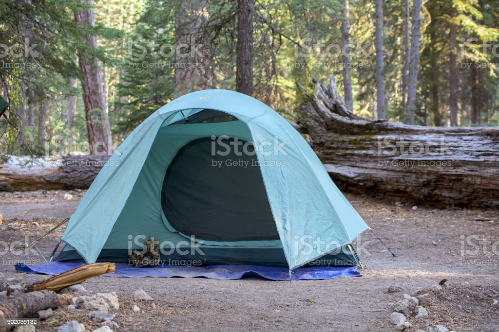 Campground green tent among pine trees stock photo