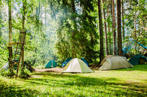 campground on the edge of the forest - camping imagens e fotografias de stock