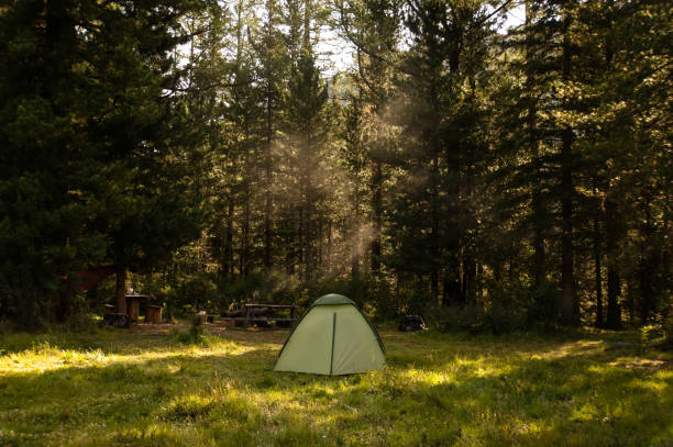 Camping and tent under the pine forest stock photo
