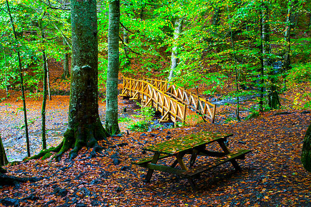 Camping area in the forest stock photo