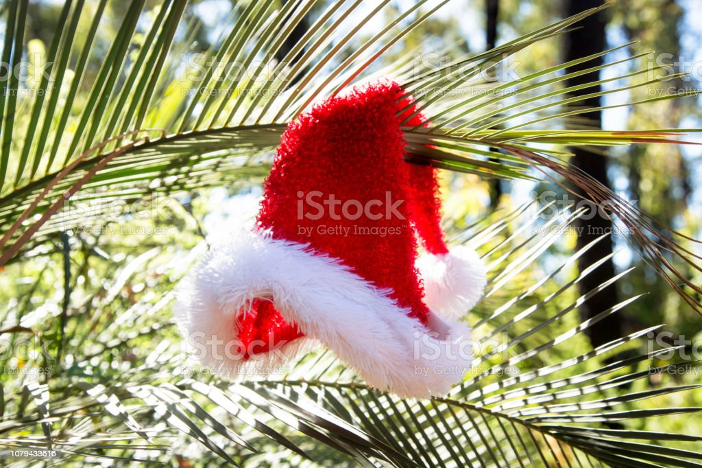 Christmas Camping Australia.Camping Christmas Australia Stock Photo More Pictures Of