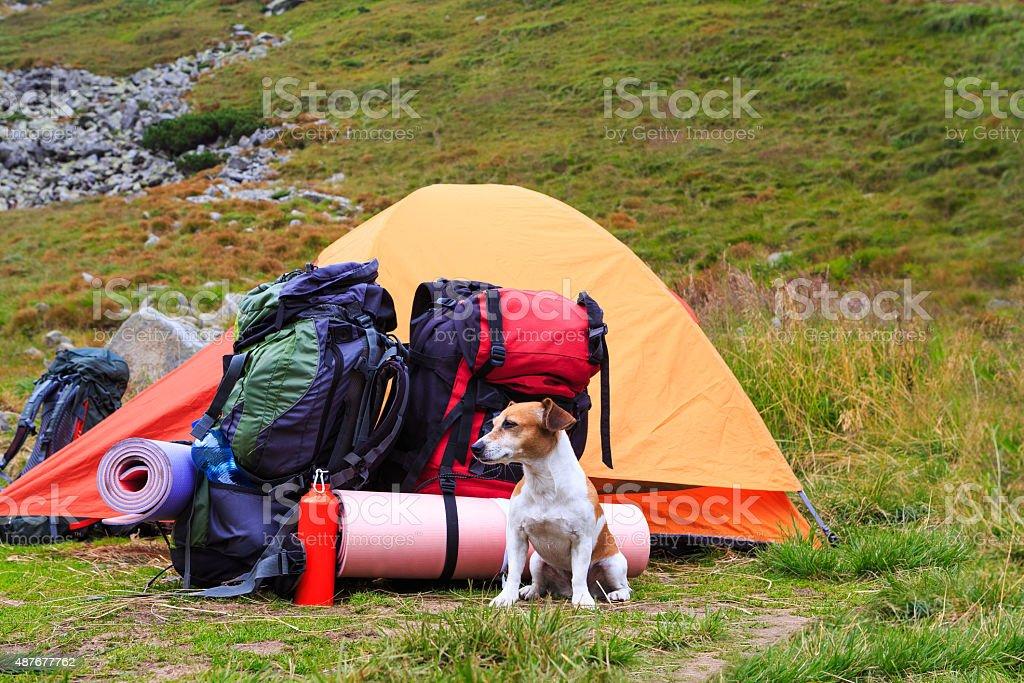 Camping dog guarding tent stock photo