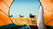 istock Camping in Africa 1053220230