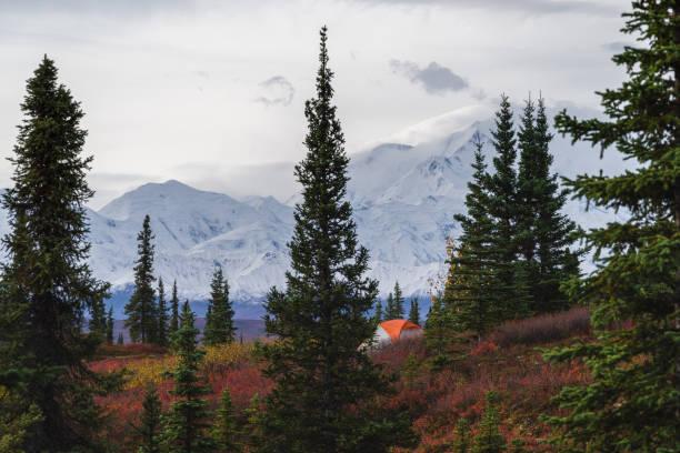 Camping in Denali National park, facing Mt Mckinley stock photo