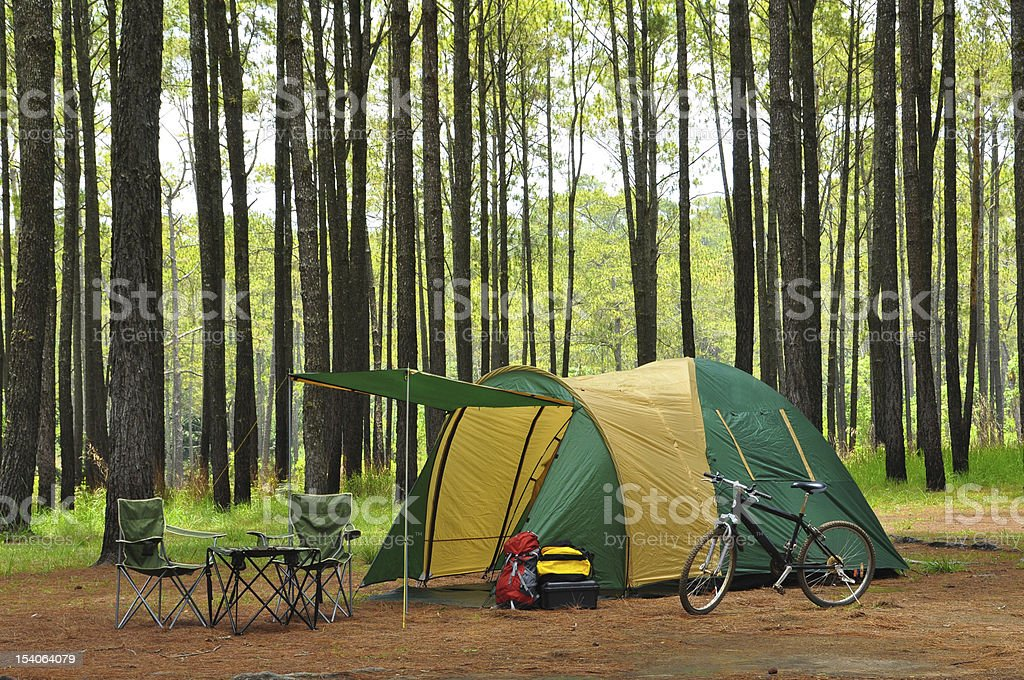 camping in pine forest royalty-free stock photo