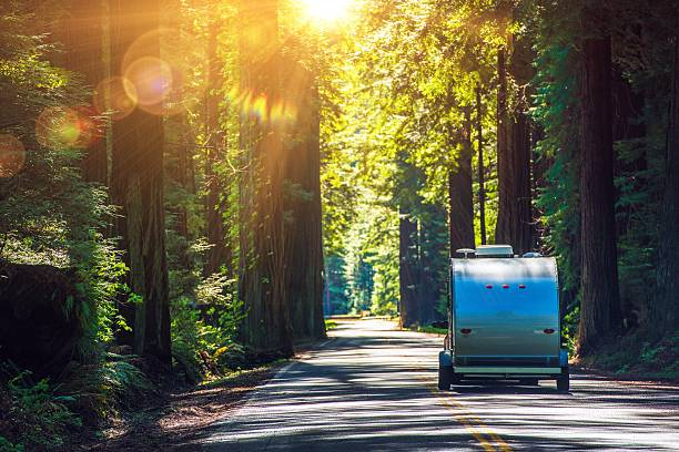 Camping in Redwoods Camping in Redwoods. Travel Trailer RV on the Redwood Highway. California RVing. Camper on the Road. caravan photos stock pictures, royalty-free photos & images