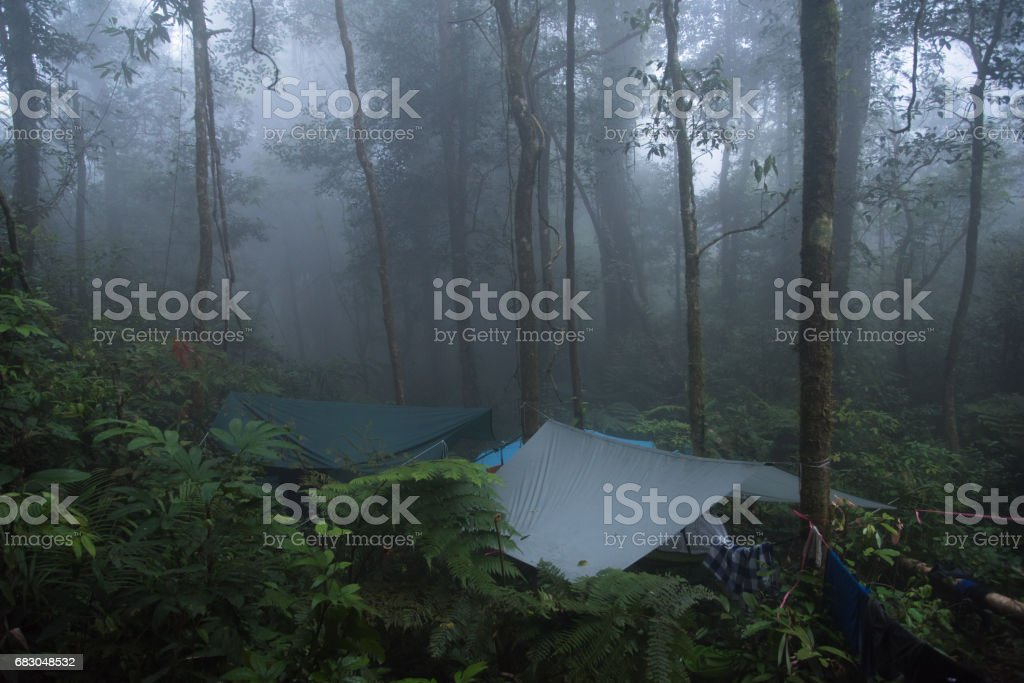 camping in the rainforest with mist foto de stock royalty-free