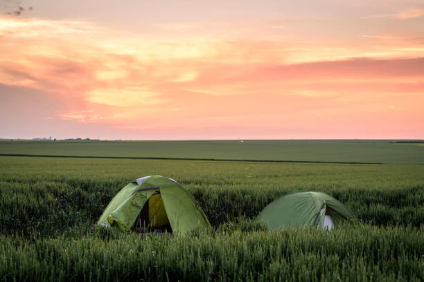 camping in the wheat fields stock photo
