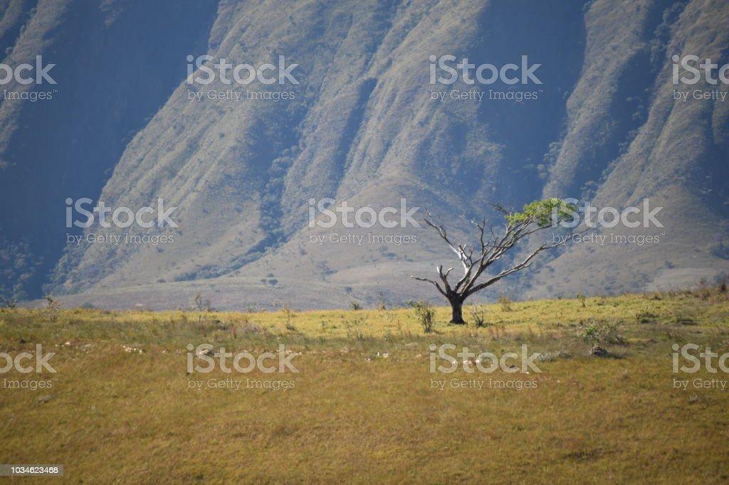 Acampamento na vida selvagem - foto de acervo