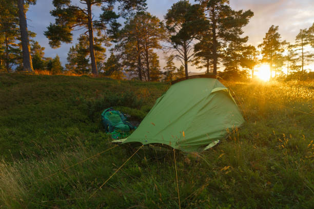 Camping on in the forest during the sunset or sunrise. Bright sunlight. stock photo