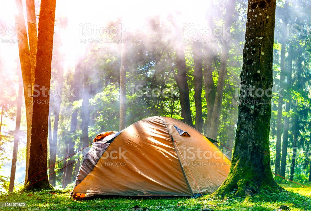 Camping tent in green forest in spring sunny morning with fog haze...