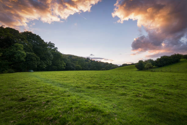 camping tent in the green and lush meadows of england at sunset - agricultural field stock pictures, royalty-free photos & images