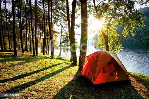 istock Camping tents in pine tree forest by the lake 649155058