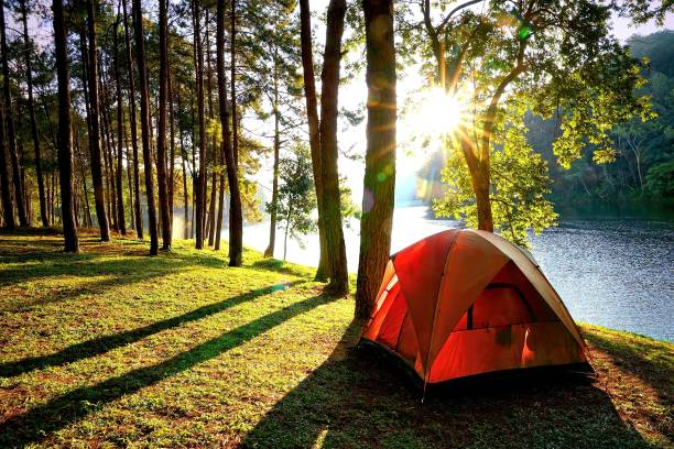camping tents in pine tree forest by the lake - camping stock photos and pictures