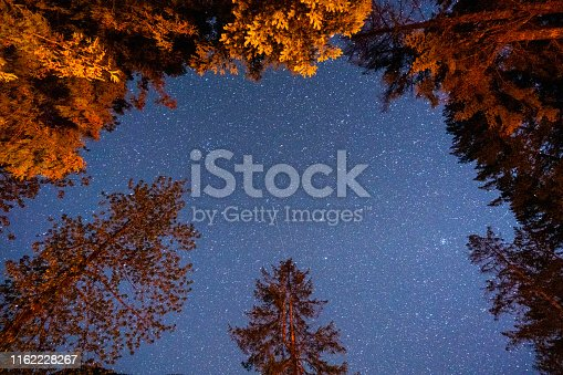 Looking at the stars in the night sky through the forest of trees on Vancouver island, Canada