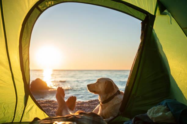 Camping with dog picture id1172472370?b=1&k=6&m=1172472370&s=612x612&w=0&h=xfahpjzx0ozhu3 peyhrpwkkkdoxe4qbb s1d9zhriu=