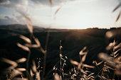 campo di grano in italia