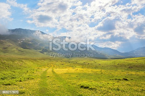 Buttercup meadow with tire tracks on the plains in the Gran Sasso e Monti della Laga National Park, Province of L'Aquila