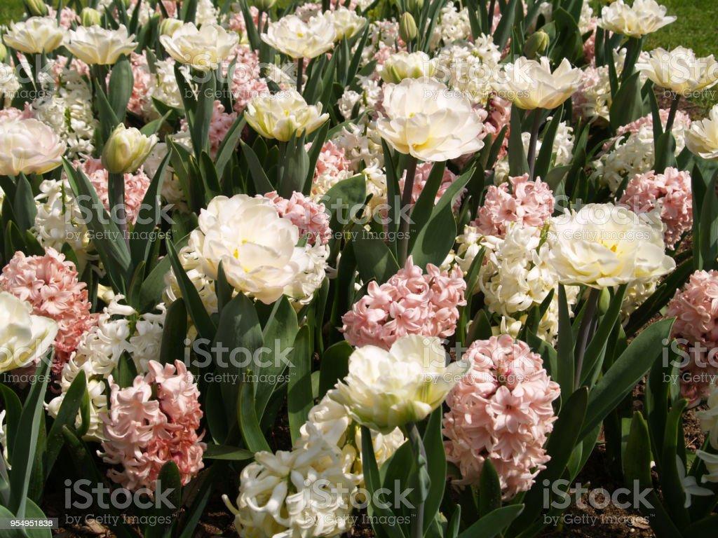 Campo in fiore - foto stock