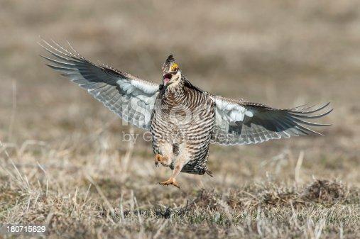 Prairie Chicken Landing