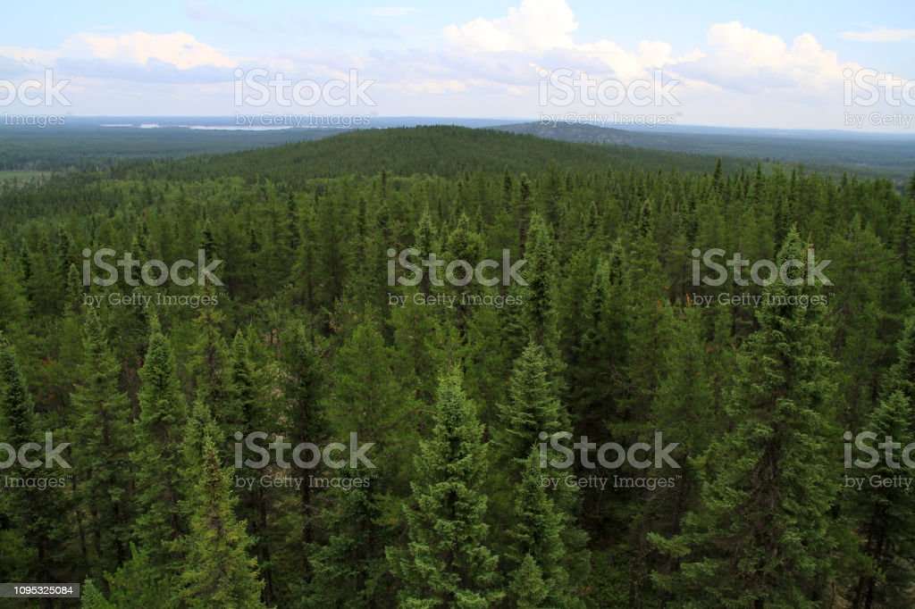 Canada shield is covered by boreal forests