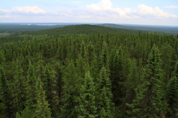 Canada boreal forest Canada shield is covered by boreal forests taiga stock pictures, royalty-free photos & images
