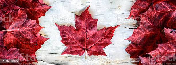 Photo of Canada Flag Made with Leaves on Birch - Banner