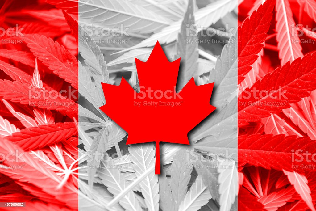 Canada Flag on cannabis background. Drug policy. Legalization of marijuana stock photo