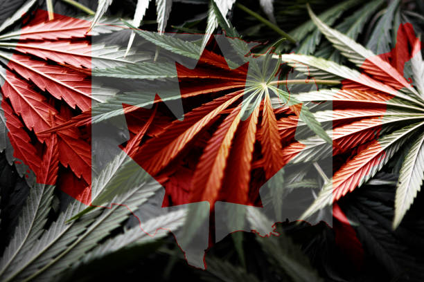 canada flag on cannabis background ,legalization of marijuana - legalizzazione foto e immagini stock