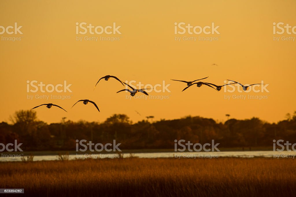 Canada geese fly over Milford Point, Connecticut at sunset. stock photo