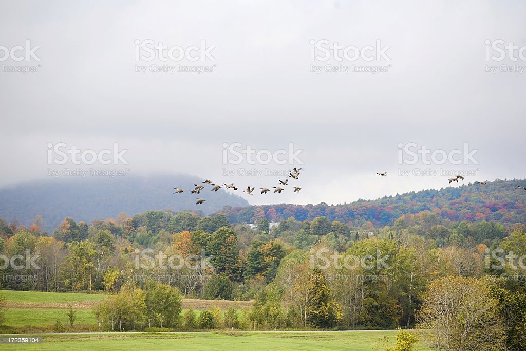 Canada Geese In The Autumn Sky royalty-free stock photo